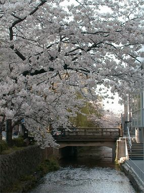 京都、高瀬川の川面にたれるように咲く染井吉野。 昼間は大混雑なので、朝食前に散歩をします。   淡いピンクの花びらにはこの時間帯の光が一番美しい。【GOETHE編集長 舘野晴彦】 lexus.jp/... ※掲載写真の権利および管理責任は各編集部にあります。LEXUS pinterestに投稿されたコメントはLEXUSの基準により取り下げる場合があります。