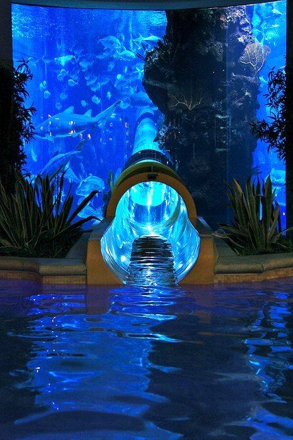 Wow! How's this for your next home aquarium? Wow so cool but wouldn't like to keep that clean would take forever!!