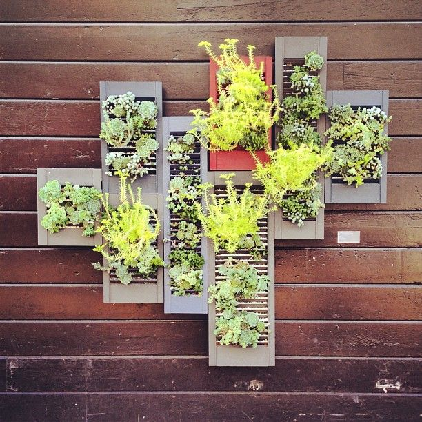 Shutters as planters, hung on an outside wall.