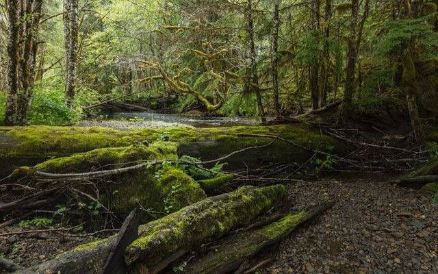 Alaska's Tongass National Forest is the crown of the 100-million acre Emerald Edge—the largest intact temperate rainforest in the world—and the people who call it home are working to keep it that way.