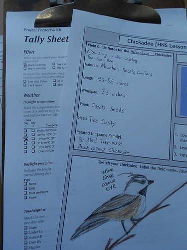 Chickadee nature study notebook pages