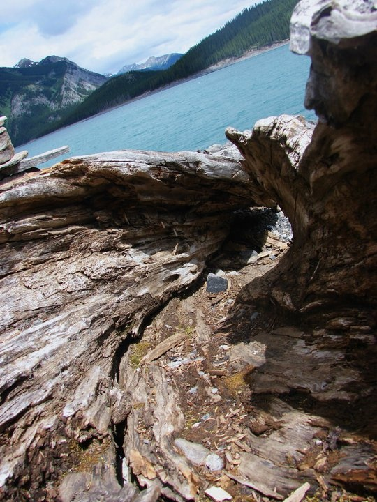 Twisted like your soul - Alberta Rocky Mountains.