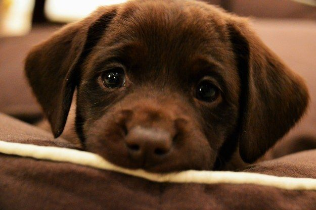 This girl who feels the need to KILL. OUR. SOULS with her lil' puppy stare. | 17 Puppies Who Are So Cute They Will Make You Mad