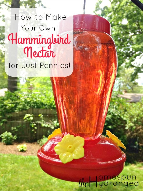 feed your for just pennies when you give this tutorial for how to make your - Homemade Hummingbird Food