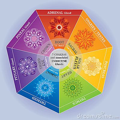 7 Chakras Color Chart with Mandalas and Endocrine Glands by Artellia, via Dreamstime
