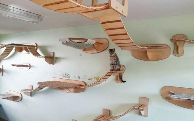Cuccie per gatti estrose e di design #cuccia #gatto #cucce #gatti