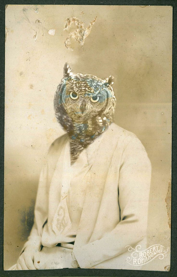"""Owl"" By Robert Romanowicz"