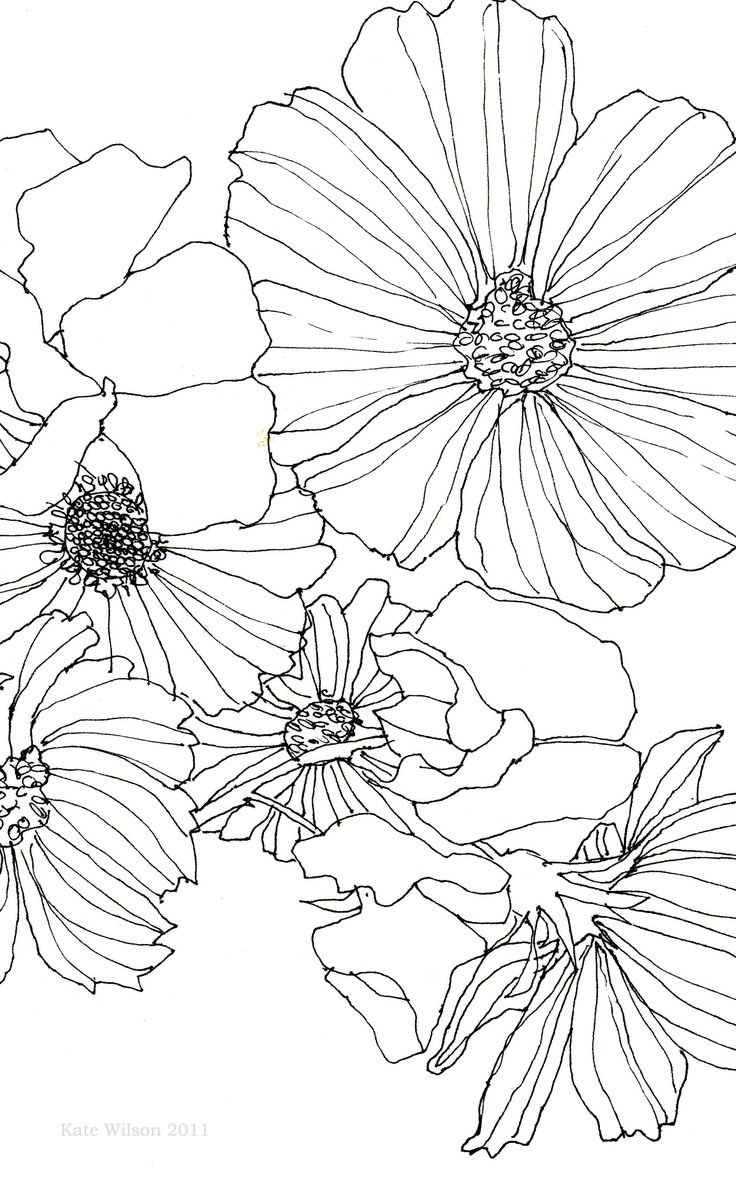 Part of a pen drawing of Cosmos and Sweet Peas drawn with a .25 Rotring pen on smooth cartridge paper.