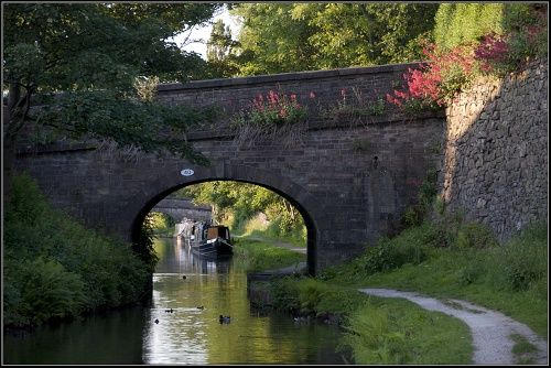 An evening walk. Evening sun on some wild flowers growing on and around bridge number 40 on the Macclesfield Canal. A picture of: Cheshire, Macclesfield