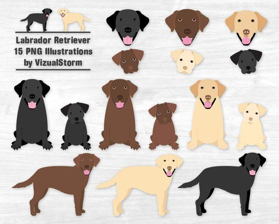 25+ Homeless Animals Images Clipart