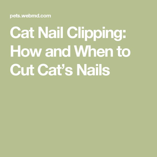 Cat Nail Clipping: How and When to Cut Cat's Nails