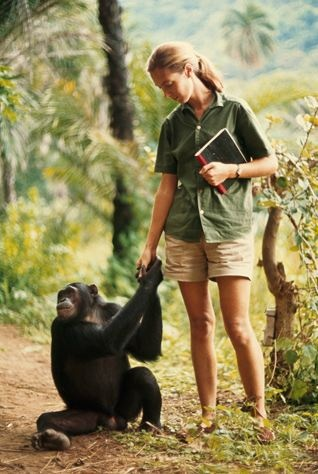 Mon rêve... baron hugo van lawick - jane goodall (reward for five years of patience and courage: a young chimpanzee confidently takes the hand of his first human friend), 1965  explore/donate: the jane goodall institute