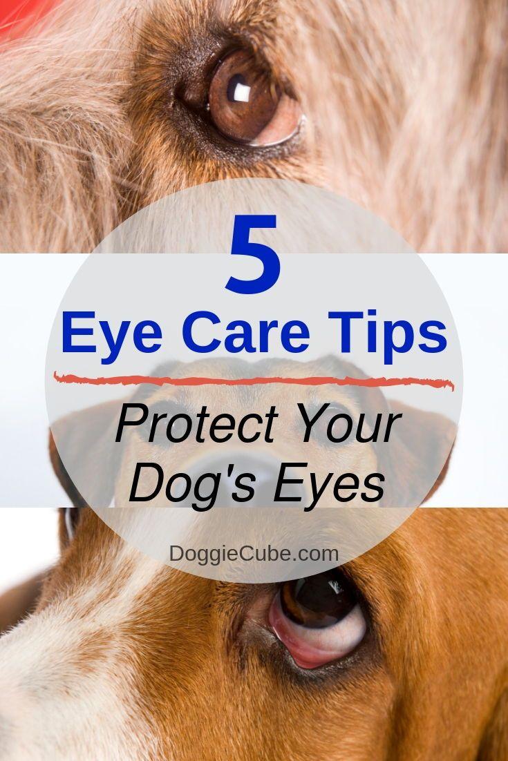 how to wipe dog eye boogers