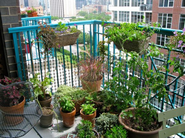 Apartment Balcony Garden For Green Garden With Potted Flower And Blue Iron…