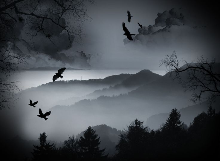 Dark crows over the forrest wallpaper from dark wallpapers - The crow wallpaper ...