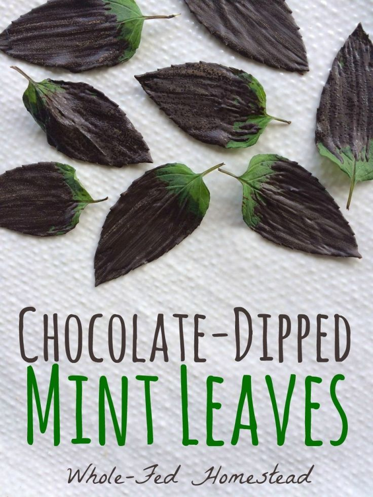 Chocolate-Dipped Mint Leaves… or, Chocolate After Dinner Mints Au Naturel by Whole-Fed Homestead
