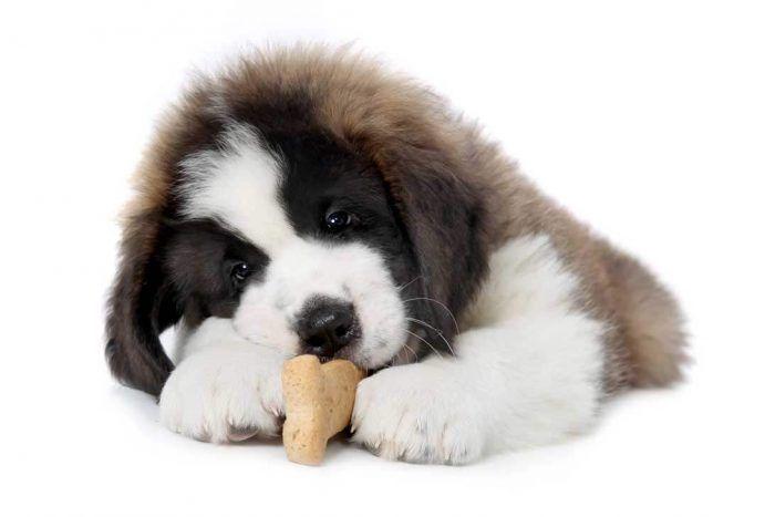 Signos de que su perro está sano Los ojos sanos son brillantes y brillantes. Además de que el ojo es bellamente brillante, brillante, el revestimiento rosa de los párpados no debe estar inflamado o hinchado. Mientras que una pequeña cantidad de moco y lágrimas acuosas es normal, cualquier pus amarillo, verde, mucha descarga ocular acuosa …