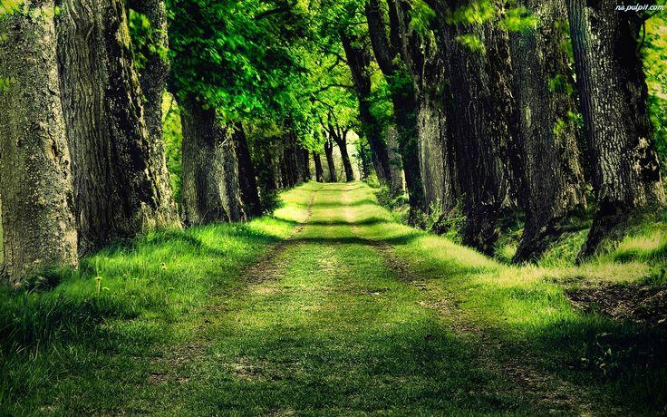 Las, Droga, Przez