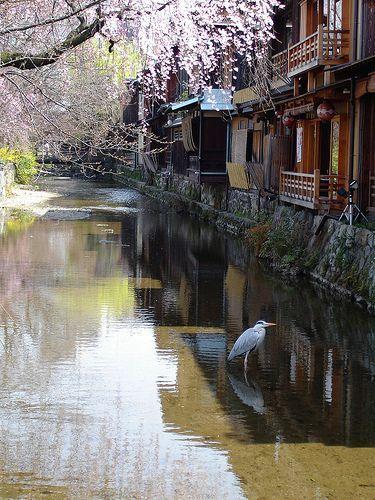 Gion, Kyoto | A heron poses in the canal along Shirakawa Minami dori. Kyoto-shi, Kyoto Prefecture, Japan