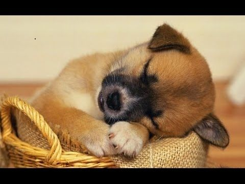 (15) SLEEP MUSIC For Dogs, Cats & All PETS ♥♥♥ Stress Relief, Anxiety, Healing Music 🎧 PET THERAPY - YouTube