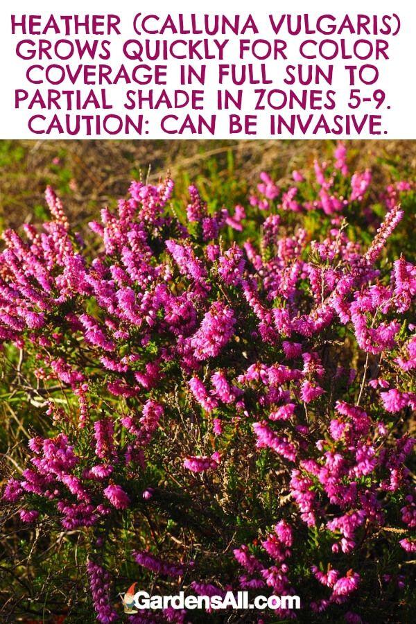 The Ultimate Guide To Purple Flowers Purple Flowers Rose Plant Care Light Purple Flowers