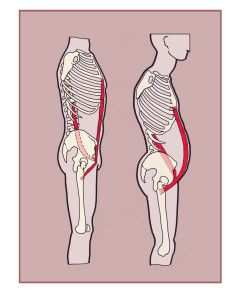 The psoas majorand the rectus abdominis muscles have an important relationship inside the body even though they don't literally work together. Muscles relate to each other in many different ways. Sometimes they work in opposition—for the hamstring to lengthen the quadriceps must shorten. This happen through the process of reciprocal inhibition and most often occurs ...