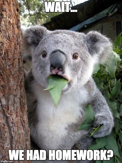 Surprised Koala Meme | WAIT... WE HAD HOMEWORK? | image tagged in memes,surprised koala | made w/ Imgflip meme maker