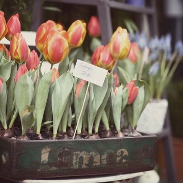 ,Gorgeous Prints, Outdoor Inspiration, Spring Flower, Paris Marketing, Easterspr, Spring Fever, So Pretty, Vintage Beautiful, Flower Boxes