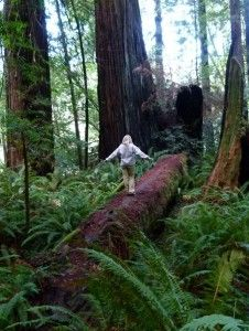 California Redwood National Park camping lodging hiking biking ...