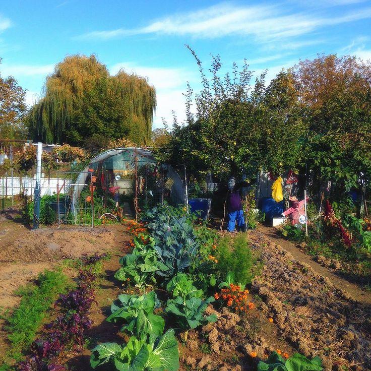 Tradition des jardins potagers rive gauche - Châlons-en-Champagne — Wikipédia