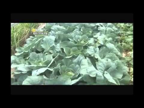 류마티스관절염에 좋은 운동: 손가락 부위 - YouTube