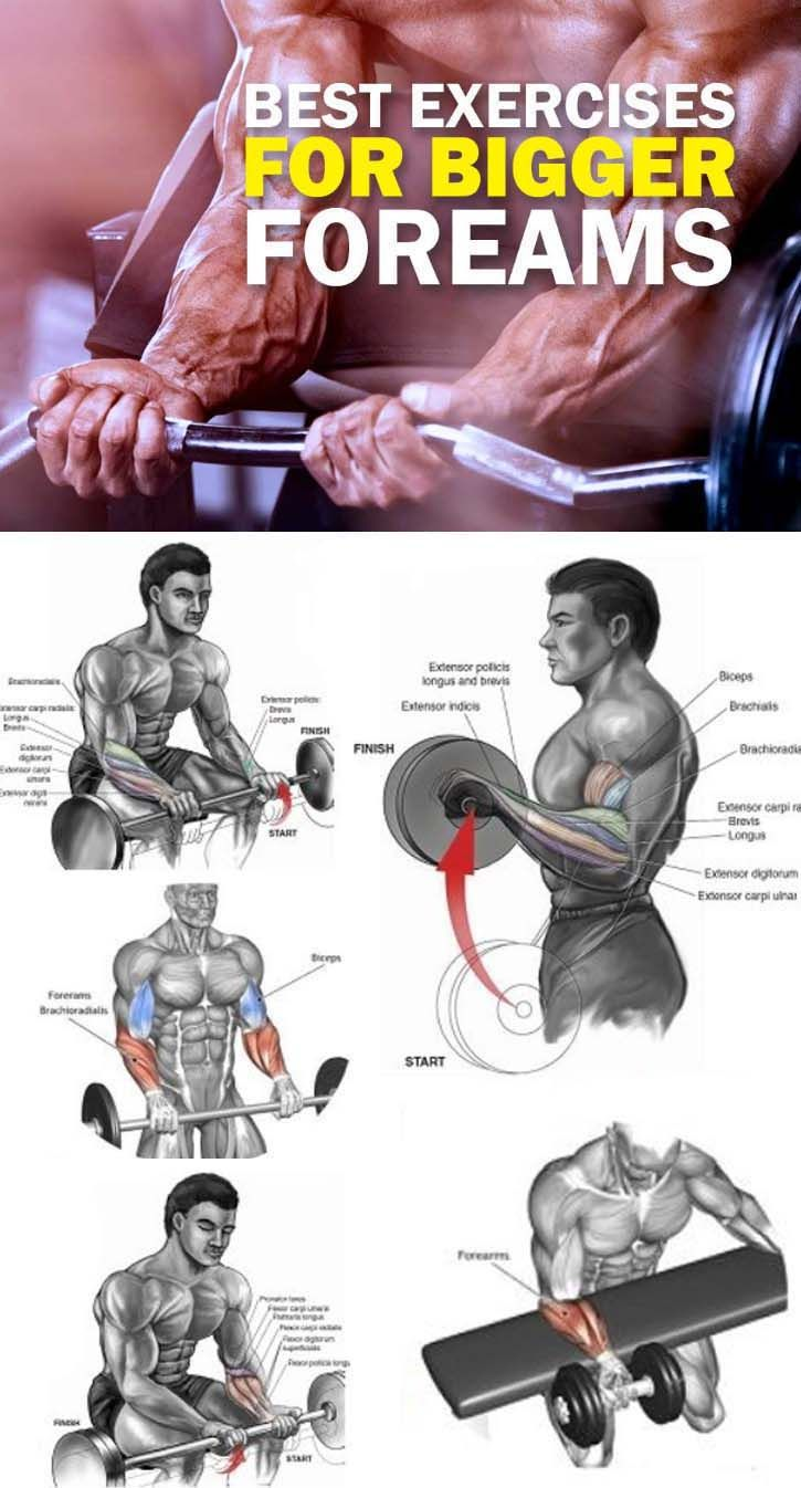 3 Of The Best Exercises Your Forearm Reverse Curls Exercise