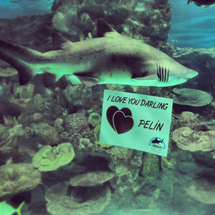 Underwater valentines messages @Turkuazoo Akvaryum aquarium