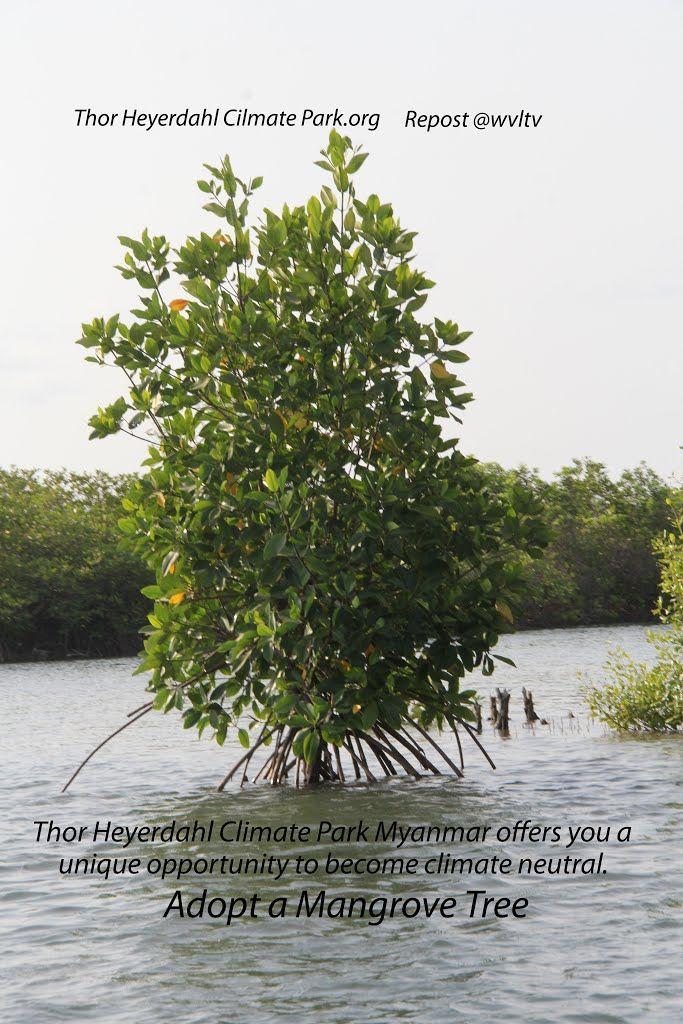 ADOPT A MANGROVE  http://www.thorheyerdahlclimatepark.org/product/mangrove-tree/