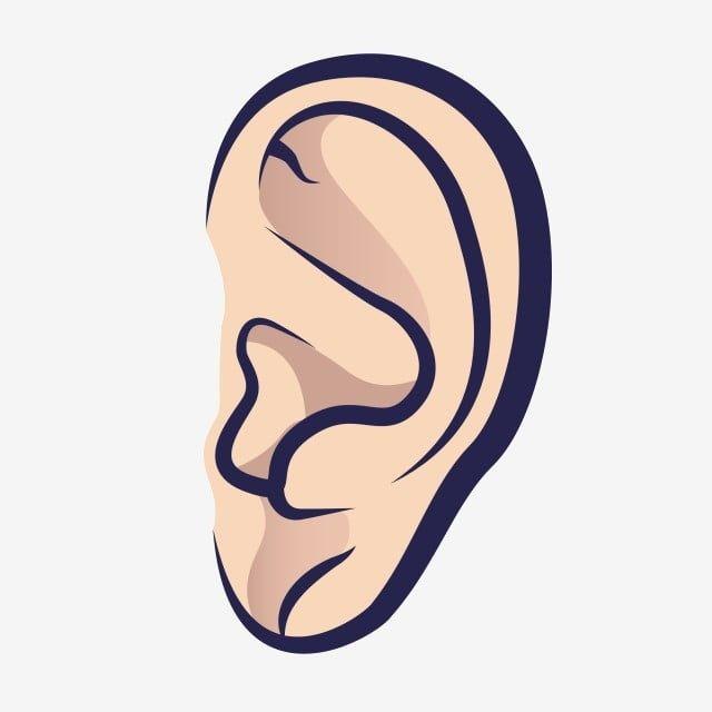 Gambar Kartun Tangan Ditarik Telinga Manusia Organ Tubuh Mendengar Clipart Telinga Kartun Png Dan Vektor Dengan Latar Belakang Transparan Untuk Unduh Gratis En 2021 Oido Dibujo Manos Dibujo Dibujos