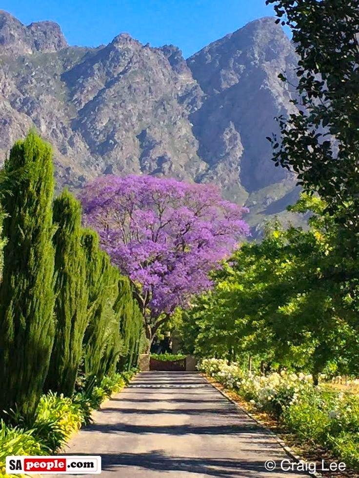 Wine estate (Franschhoek valley, South Africa)