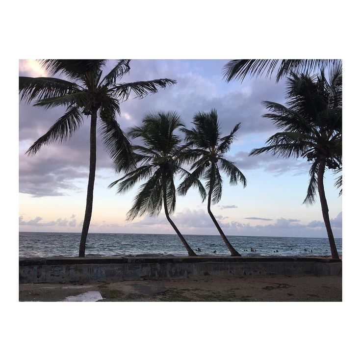 Let the wind carry you. #dreamingagain #lostintheisland #sunset #travelgram #travel #instatravel #coconut #trees #nature #landscape #wind #sea #beach #holidays #nofilters