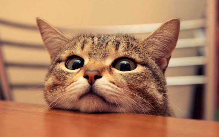 16 Cats Who Make Awkward Poses Look Really Cute | DogVacay ...