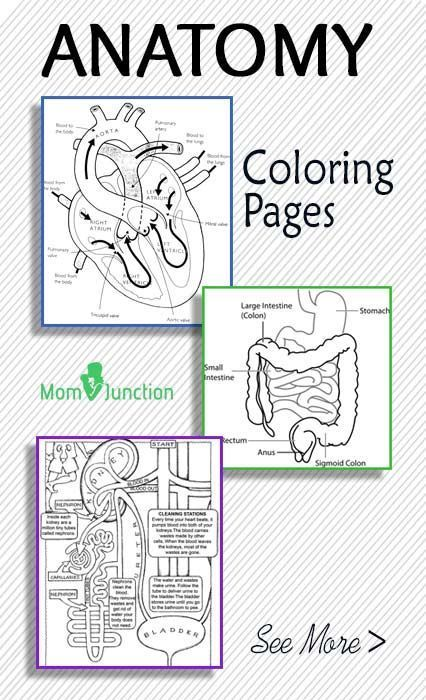 online anatomy coloring pages free - photo#13
