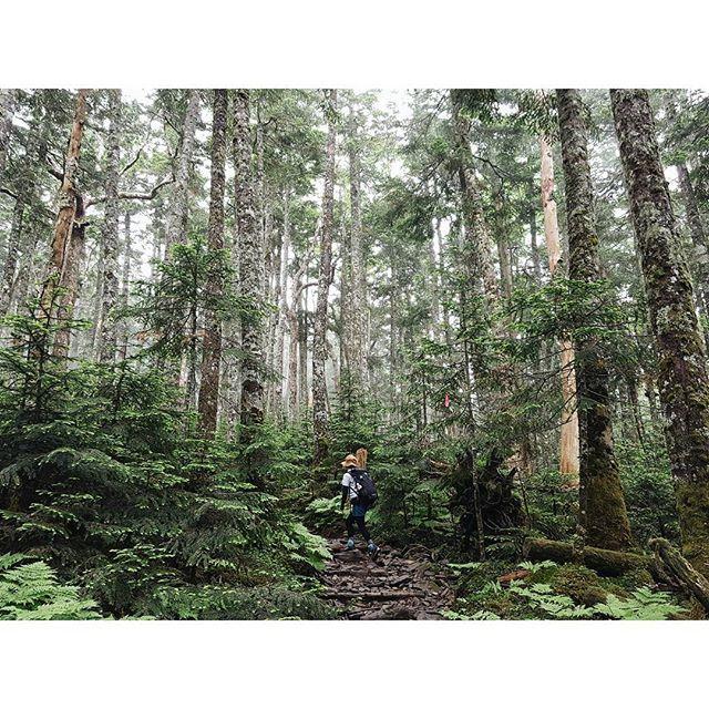 【yumi_hutte】さんのInstagramをピンしています。 《* シルバーとグリーンの森 #メルヘントレイル ・ ・ ・ #ユミユルハイ #硫黄岳 #南八ヶ岳 #八ヶ岳 #登山 #山歩き #ハイキング #日帰り登山 #レインウエア #森 #forest #アウトドア #山 #長野 #登山女子》