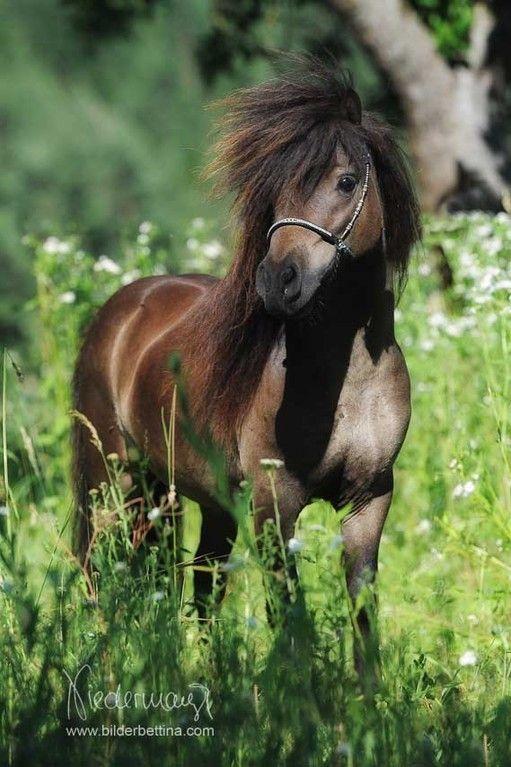 Mini Pferd