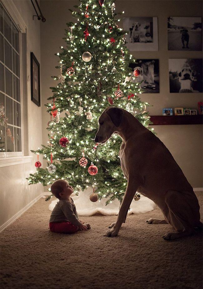 Маленький ребенок и большая собака - отлична команда! Эти 28 снимков убедят тебя в этом.