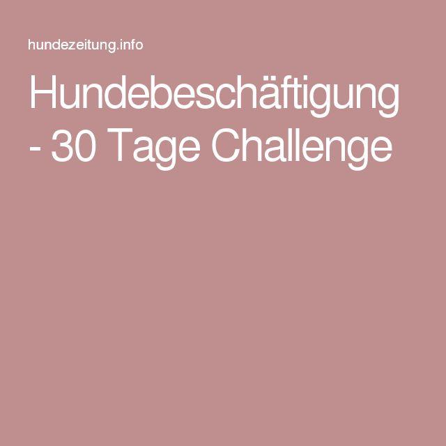 Hundebeschäftigung - 30 Tage Challenge