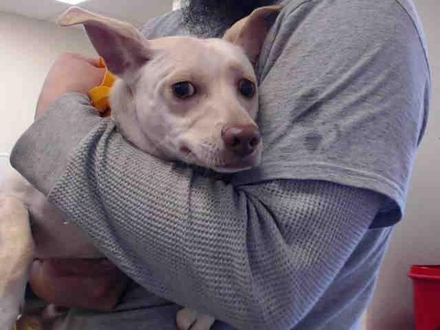 Www Petharbor Com Animal Search Adoptable Pet Adoption Animals