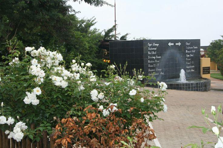 #Thaba Tshwene Game Lodge - A vista with beautiful #White Ice Berg #roses welcomes you at www.thabatshwene.co.za