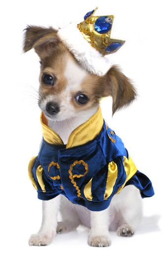 Prince Halloween Dog Costume - Cooper is so getting this for Halloween this year!