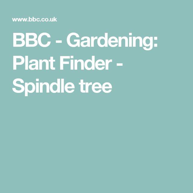 BBC - Gardening: Plant Finder - Spindle tree
