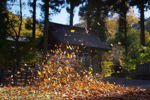 舞い散る落ち葉 風情を感じます 落ち葉 木枯らし 造形