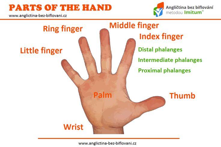 """Znáte výrazy """"thumbs-up"""" nebo """"thumbs-down""""? Jde o známé gesto, při kterém hraje hlavní úlohu náš palec. Jaké jsou ale anglické názvy dalších prstů a částí ruky? #partsofthehand #thumbsup #thumbsdown"""