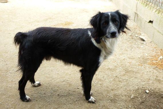 Streunerherzen E V Tiere Hunde Tierheim